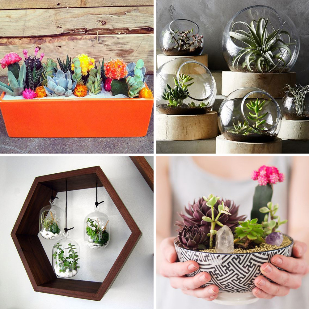 pinterest 25 id es d co avec des cactus des succulentes. Black Bedroom Furniture Sets. Home Design Ideas