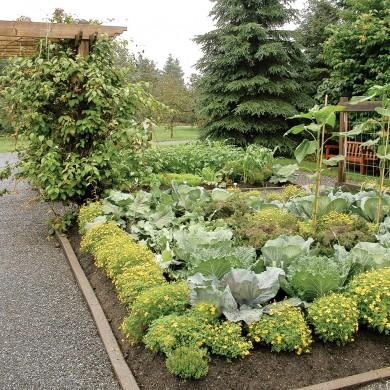 Comment loigner les insectes du jardin trucs et - Comment congeler les courgettes du jardin ...