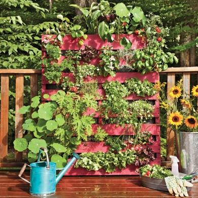Faire pousser ses fines herbes c 39 est facile trucs et - Herbes aromatiques a faire pousser ...