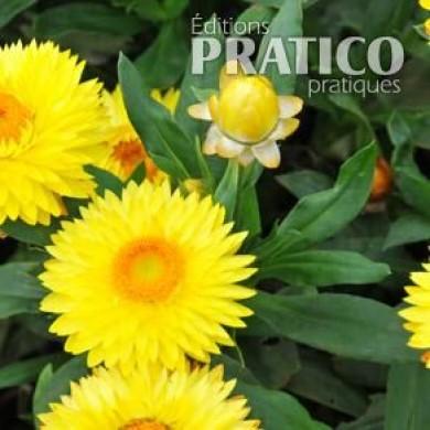 Immortelle 39 strawburst yellow 39 fiches de plante for Plante immortelle