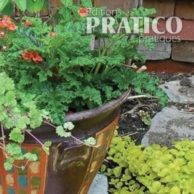 Fines herbes en pot inspirations jardinage et - Fines herbes en pot interieur ...