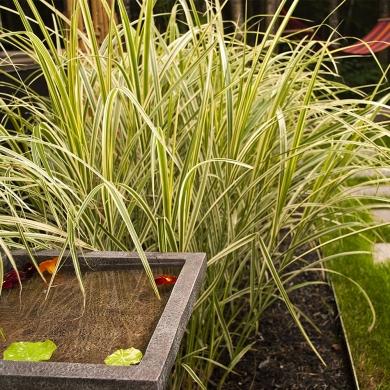 V g taux textur s jardin inspirations jardinage et for Jardin 8686