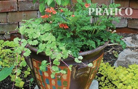 fines herbes en pot inspirations jardinage et ext 233 rieur pratico pratique