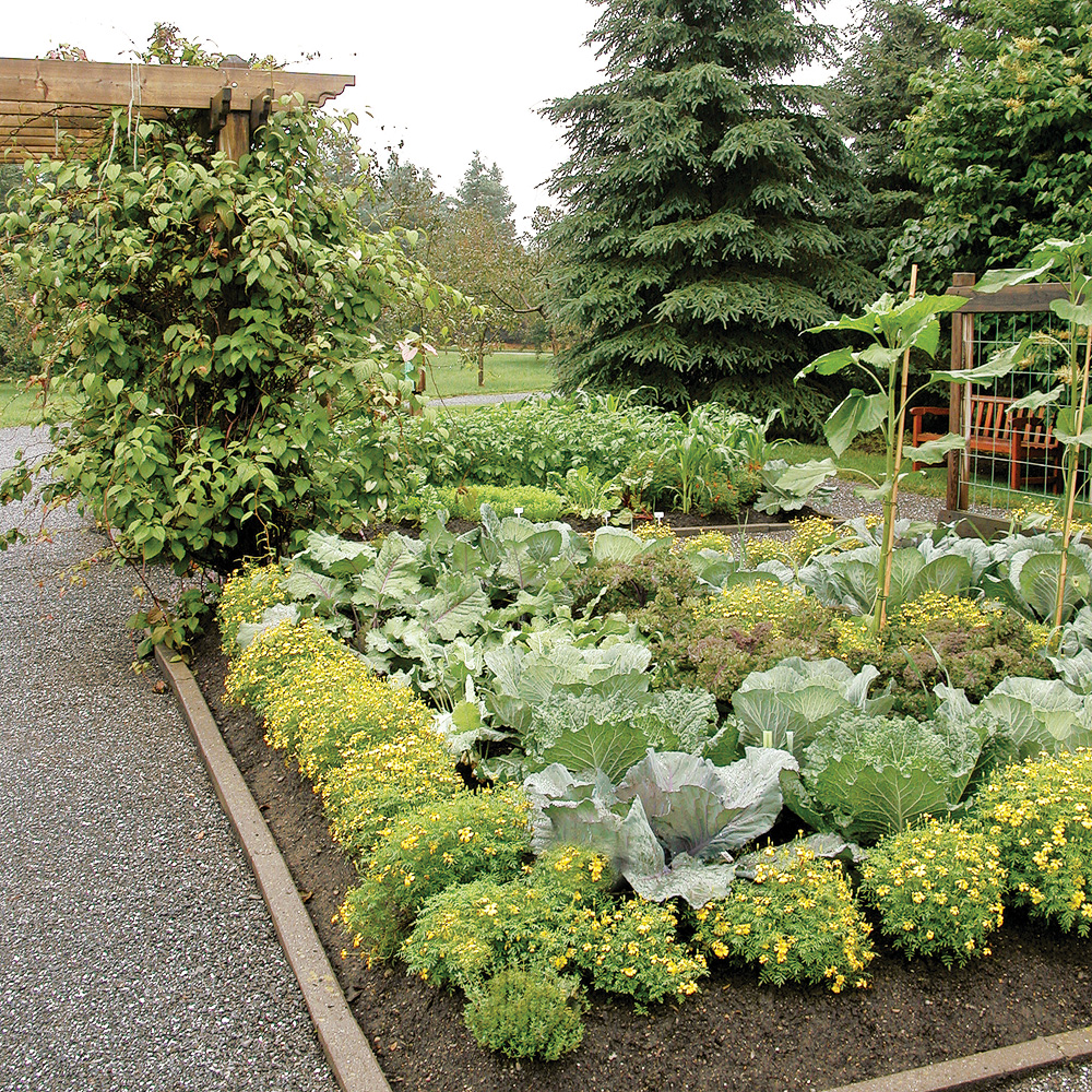 Comment loigner les insectes du jardin trucs et for Jardin et jardinage