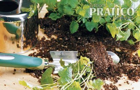 Comment semer des fines herbes l 39 int rieur en tapes - Fines herbes en pot interieur ...