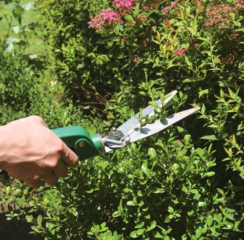 Comment tailler une haie trucs et conseils jardinage - Comment tailler un noisetier ...