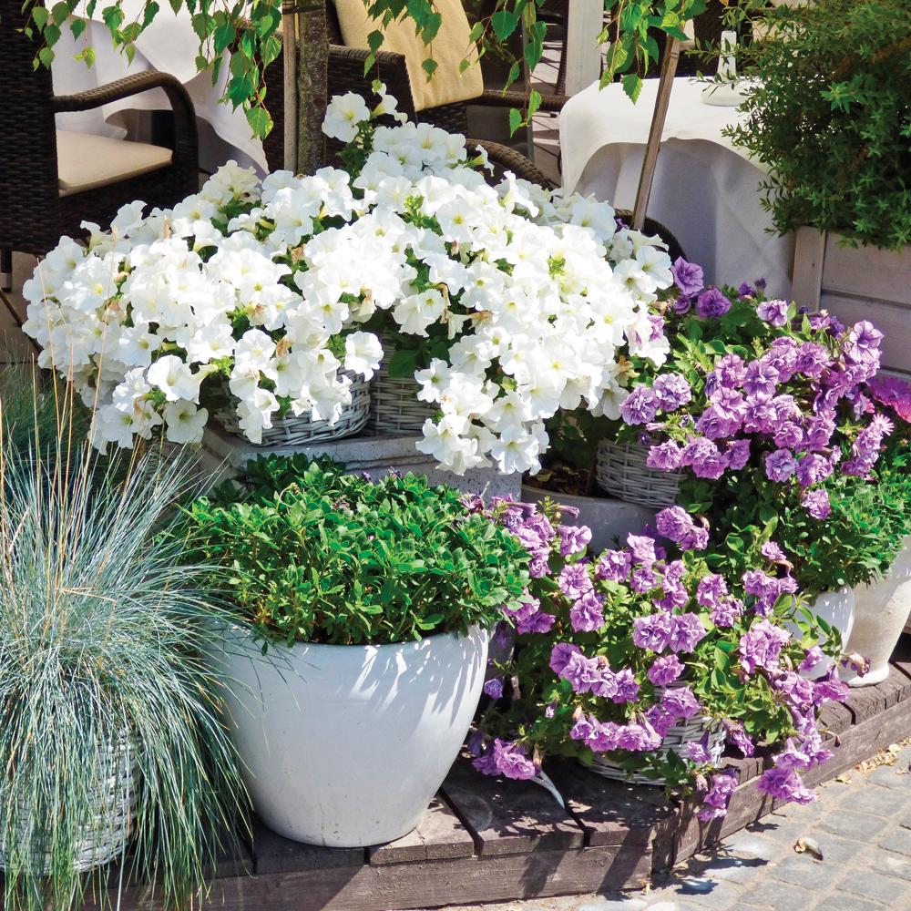 Marche suivre pour cr er une jardini re parfaite trucs for Creer une voliere exterieur