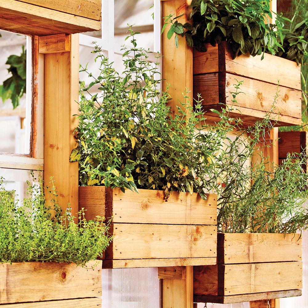 r aliser son propre potager en pot actualit s. Black Bedroom Furniture Sets. Home Design Ideas