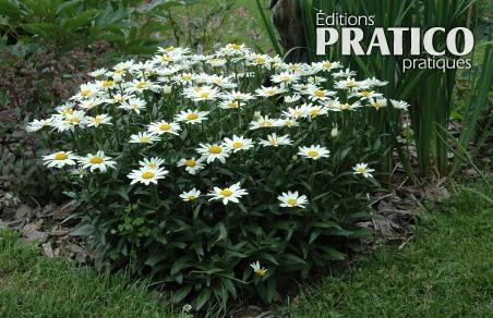 cinq plantes vivaces sans entretien trucs et conseils