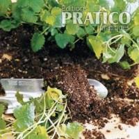 Asperge fiches de plante jardinage et ext rieur for Asperge plante interieur