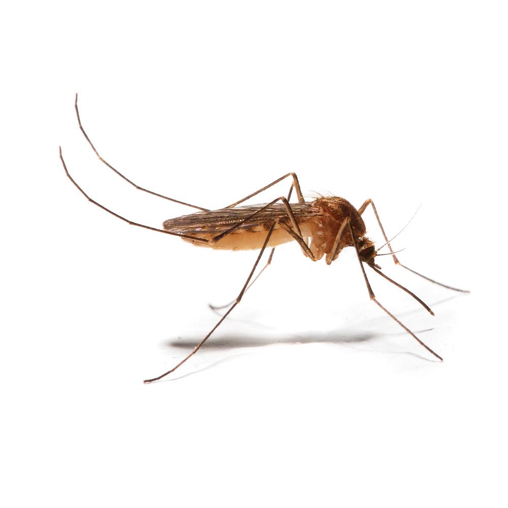nos meilleurs trucs pour viter les piq res de moustiques. Black Bedroom Furniture Sets. Home Design Ideas