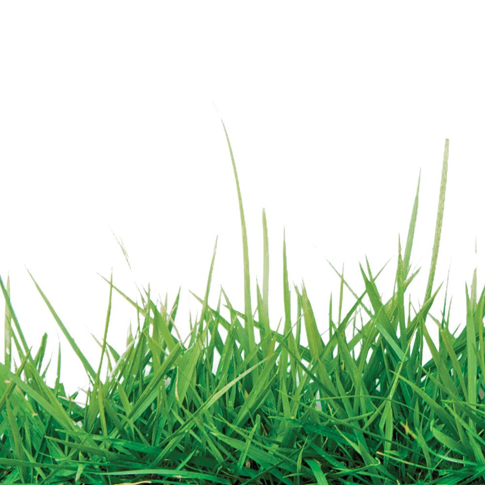 Trucs pour avoir une belle pelouse verte trucs et - Comment avoir une belle pelouse ...